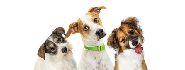Three Cute Dogs Tilting Heads Looking Forward