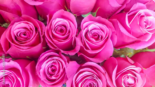 Fotografía Pink roses background; pink roses meanings include admiration,  romance, and mor