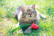 Portrait Of A Cat With Tulip F...