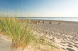 Strand Gras Meer Strandkörbe