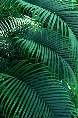 FototapetaBeautiful of fern tropical leaves