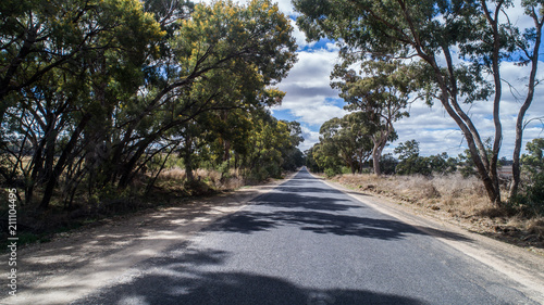 Poster Oceanië Australian country rural road lined with eucalyptus gum trees