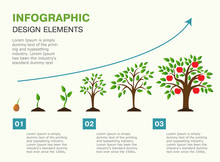 Infographic Of Planting Tree. Seeds Sprout In Ground. Presentation Template With The Evolution Of A Tree. Vector Illustration. Isolated On White Background.