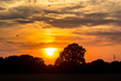 Old oak and beautiful sunset