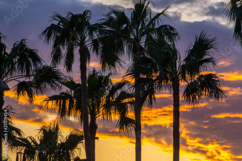 Mallorca, Glowing orange sky over palm trees in paradise