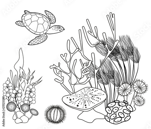 Coral Reef Coloring Page   429x500