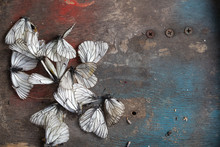 Dead White Butterflies On A Faded Wooden Background. A Symbol Of The Withering Of Summer, Environmental Problems, The Dying Of Nature.