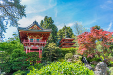 Japanese Tea Garden, San Francisco California. USA