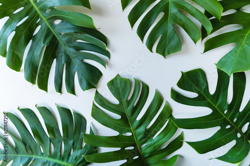 Foto  Tropical leaves on white background