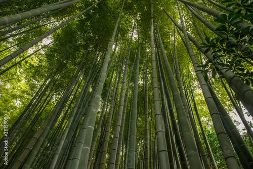 Foto op Plexiglas Bamboe Bamboo forest, Japan