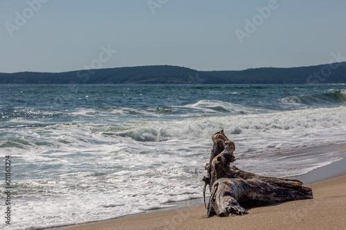 Fototapety, obrazy: Trunk on the beach
