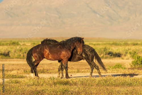 Photo  Wild Horses in Summer in the Utah Desert