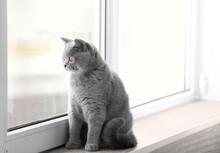 Cute Funny Cat On Window Sill