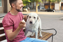 Owner Treating His Yellow Labrador Retriever With Ice-cream Outdoors