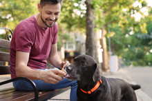 Owner Treating His Brown Labrador Retriever With Ice-cream Outdoors