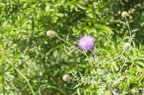 Purple fuzzy flower buy this stock photo and explore similar purple fuzzy flower mightylinksfo