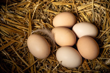 Farm Scene, Group Eggs On Straw, Feathers, Eggs High Protein, Healthy Food, Good Lifestyle. Happy Easter Concept. With Copy Space