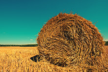 Rolled Hay Bales In Field