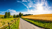Landscape In Summer With Bright Sun And Golden Cornfield
