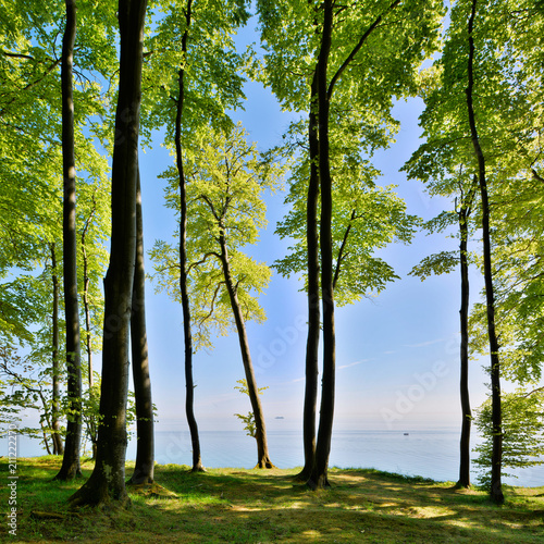 Coastal Forest of Beech Trees in Spring, view over the Baltic Sea, Rugen Island, Germany