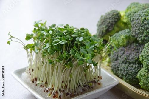 ブロッコリースプラウト Broccoli Sprout