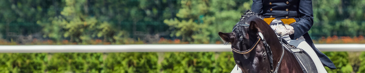 Dressage horse and rider. Black horse portrait during equestrian sport competition. Advanced dressage test. Copy space for your text. Horizontal photo banner for website header design.
