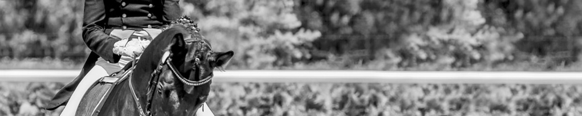 Dressage horse and rider. Black and white horse portrait during equestrian sport competition. Advanced dressage test. Copy space for your text. Horizontal photo banner for website header design.