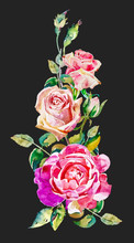 Watercolor Vintage Pink Roses Pattern Isolated On Dark