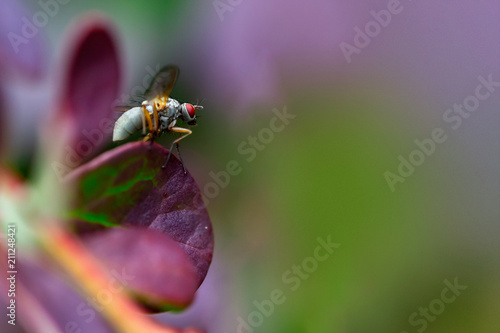 Tuinposter Macrofotografie insect fly macro on leaf
