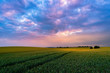 canvas print picture - sommerliches Feld