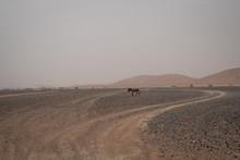 Ruiny Na Pustyni