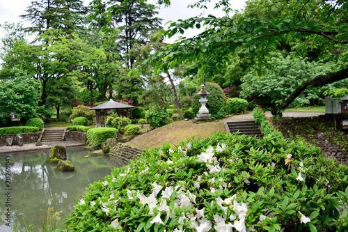Foto op Canvas Azalea 富山市 松川公園つつじ