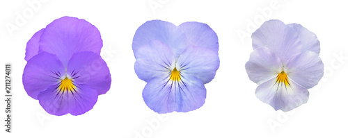 Spoed Foto op Canvas Pansies Set of pansies isolated on white background.