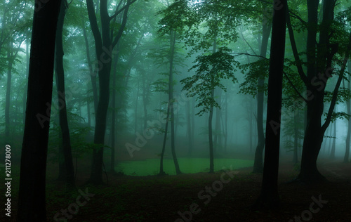 Fototapeten Wald Panorama of foggy forest. Fairy tale spooky looking woods in a misty day. Cold foggy morning in horror forest