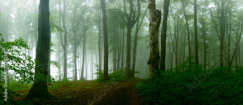 Photo Stands Forest Panorama of foggy forest. Fairy tale spooky looking woods in a misty day. Cold foggy morning in horror forest