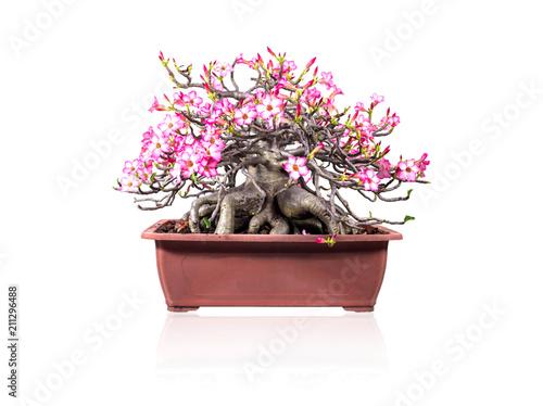 Beautiful bonsai tree with pink flower in flower pot on