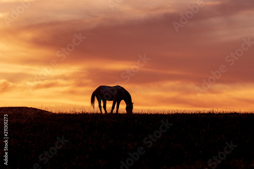 Wild Horse Stallion Silhouetted at Sunset