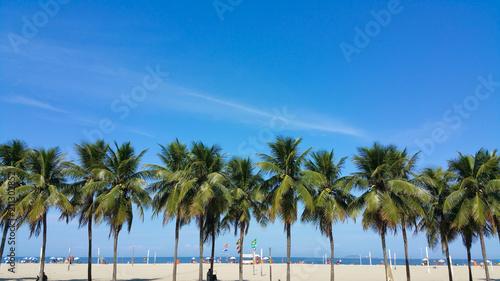 Poster Palmier Coconut trees on Copacabana beach Rio de Janeiro Brazil
