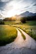 Feldweg und Getreidefeld im Sonnenuntergang, Harmonie