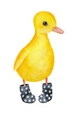 Little funny duckling character wearing black dotted welly rainboots. Bright yellow feathers, beutiful eyes. Hand drawn water color graphic painting on white background, isolated rainy day clip art. - 211326811
