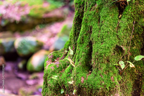 Deurstickers Bomen Beautiful forest tree trunk covered in moss