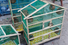 Group Of Birds Are Caged For S...