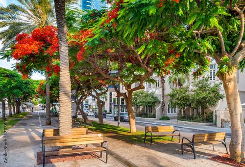 Cuadros en Lienzo Cityscape of  Rothschild boulevard  in Tel Aviv, Israel.