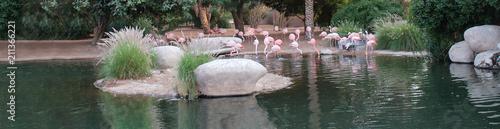 Pink flamingos shore of pond natural habitats. Copy space. Web Banner size.
