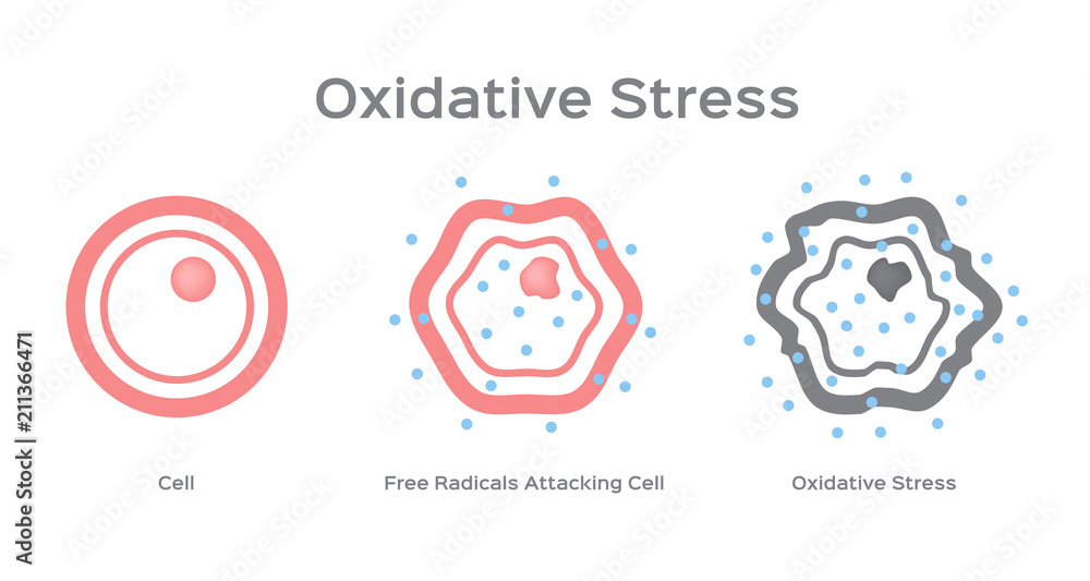 Fototapeta Oxidative Stress cell vector / free radical
