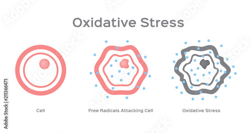 Fotografie, Tablou Oxidative Stress cell vector / free radical