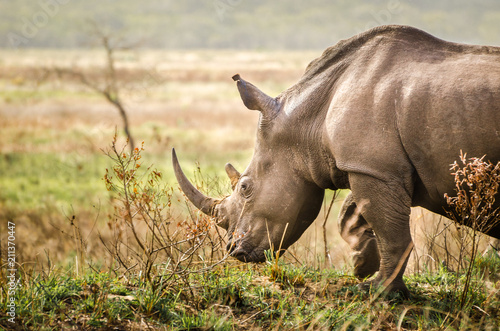 Tuinposter Neushoorn Rhinoceros,Kruger National Park, South Africa