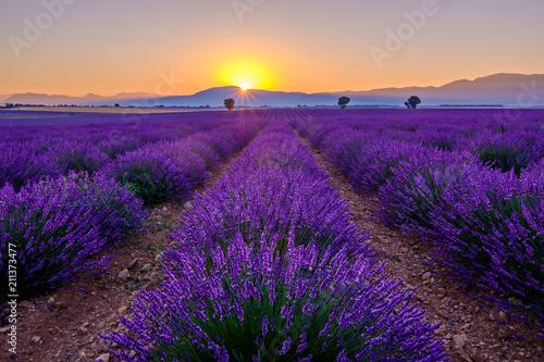 Spoed Foto op Canvas Violet Champ de lavande avec des arbres et montagnes en arrière-plan. Lever de soleil. Plateau de Valensole, Provence, France.