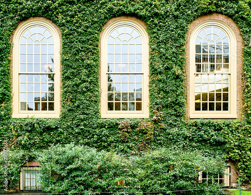 Ivy wall in Harvard Fototapete