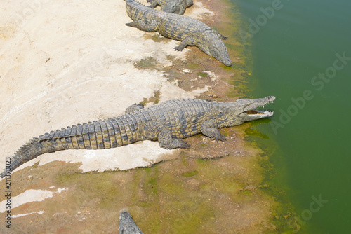 Foto op Canvas Krokodil crocodile park